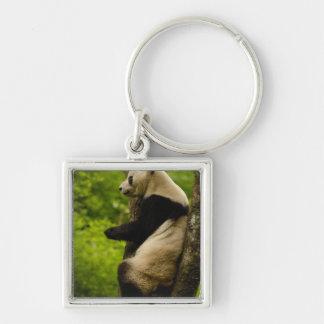 Giant panda Ailuropoda melanoleuca) Family: Silver-Colored Square Keychain