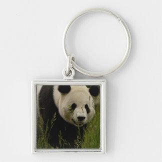 Giant panda (Ailuropoda melanoleuca) Family: Silver-Colored Square Keychain