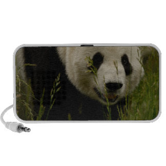 Giant panda (Ailuropoda melanoleuca) Family: Mp3 Speakers