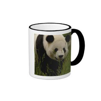Giant panda (Ailuropoda melanoleuca) Family: Coffee Mug