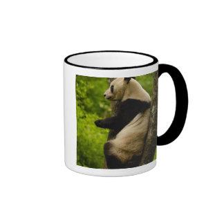 Giant panda Ailuropoda melanoleuca) Family: Mug