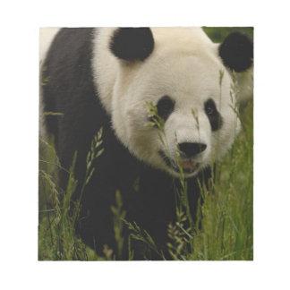 Giant panda (Ailuropoda melanoleuca) Family: Note Pad