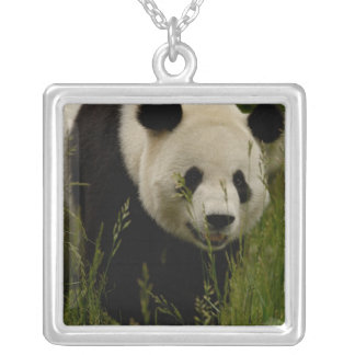 Giant panda (Ailuropoda melanoleuca) Family: Silver Plated Necklace