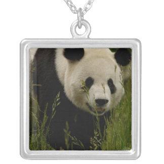 Giant panda (Ailuropoda melanoleuca) Family: Square Pendant Necklace