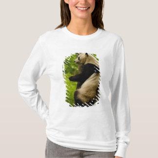 Giant panda Ailuropoda melanoleuca) Family: T-Shirt