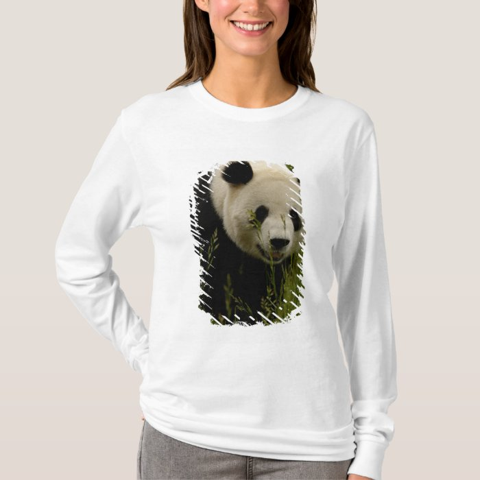 Giant panda (Ailuropoda melanoleuca) Family: T-Shirt