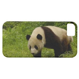 Giant panda (Ailuropoda melanoleuca) in its iPhone SE/5/5s Case
