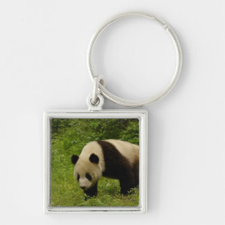 Giant panda (Ailuropoda melanoleuca) in its Silver-Colored Square Keychain