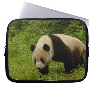Giant panda (Ailuropoda melanoleuca) in its Laptop Sleeve