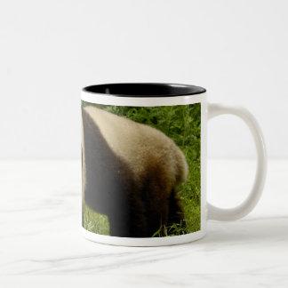 Giant panda (Ailuropoda melanoleuca) in its Mug