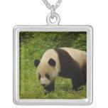 Giant panda (Ailuropoda melanoleuca) in its Square Pendant Necklace