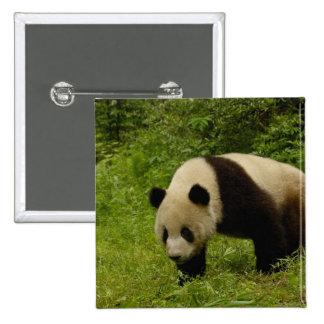 Giant panda (Ailuropoda melanoleuca) in its Pinback Button