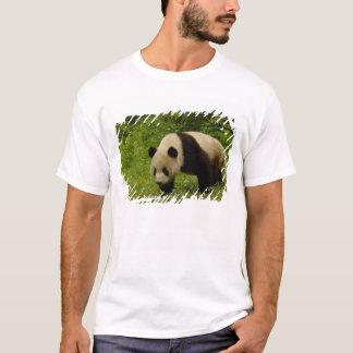 Giant panda (Ailuropoda melanoleuca) in its T-Shirt
