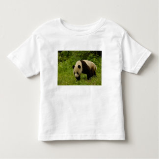 Giant panda (Ailuropoda melanoleuca) in its Toddler T-shirt