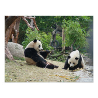 Giant Panda and Bamboo Poster