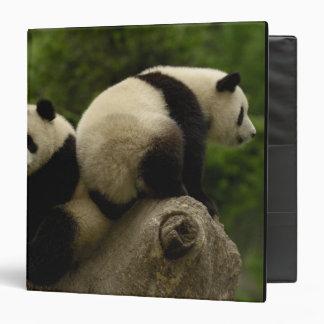 Giant panda babies Ailuropoda melanoleuca) 10 Vinyl Binders