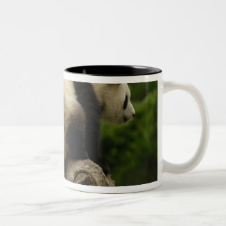 Giant panda babies Ailuropoda melanoleuca) 10 Coffee Mug