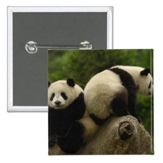 Giant panda babies Ailuropoda melanoleuca) 10 Pinback Button