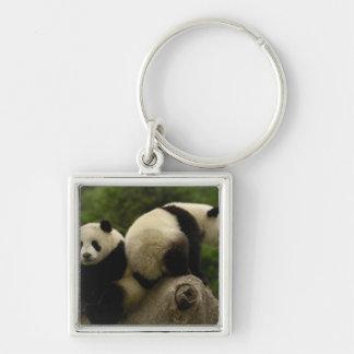Giant panda babies Ailuropoda melanoleuca) 10 Silver-Colored Square Keychain