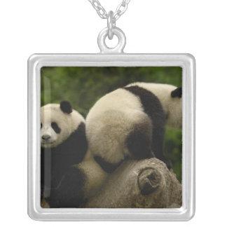Giant panda babies Ailuropoda melanoleuca) 10 Square Pendant Necklace