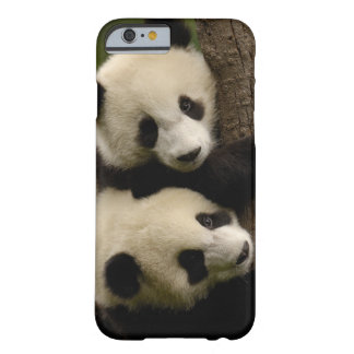 Giant panda babies (Ailuropoda melanoleuca) 2 Barely There iPhone 6 Case