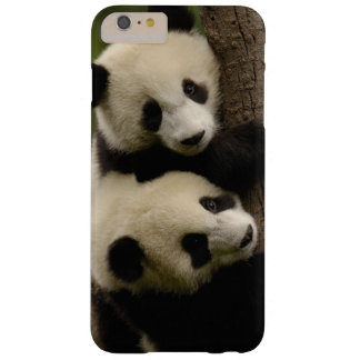 Giant panda babies (Ailuropoda melanoleuca) 2 Barely There iPhone 6 Plus Case
