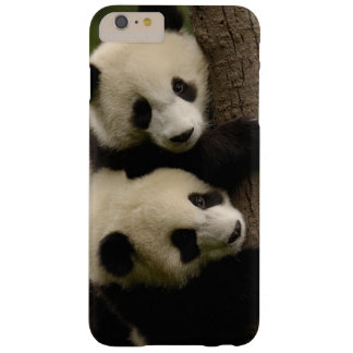 Giant panda babies (Ailuropoda melanoleuca) 2 Barely There iPhone 6 Plus Case