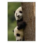 Giant panda babies Ailuropoda melanoleuca) 2 Greeting Cards