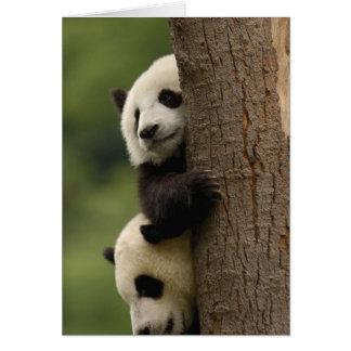 Giant panda babies Ailuropoda melanoleuca) 2 Card