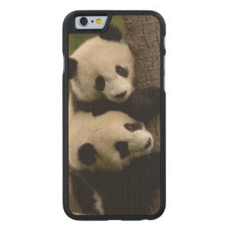 Giant panda babies (Ailuropoda melanoleuca) 2 Carved Maple iPhone 6 Slim Case