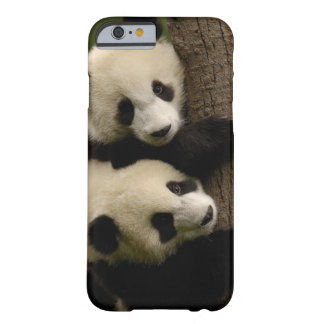 Giant panda babies (Ailuropoda melanoleuca) 2 Barely There iPhone 6 Case
