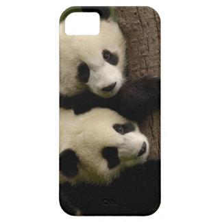 Giant panda babies (Ailuropoda melanoleuca) 2 iPhone 5 Case