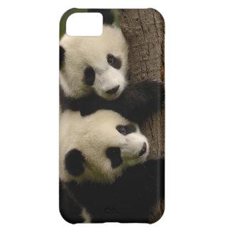 Giant panda babies (Ailuropoda melanoleuca) 2 Case For iPhone 5C