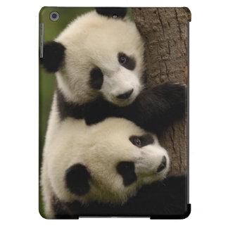 Giant panda babies (Ailuropoda melanoleuca) 2 Case For iPad Air