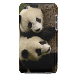 Giant panda babies (Ailuropoda melanoleuca) 2 Barely There iPod Cases