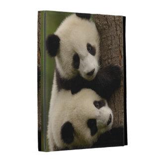 Giant panda babies (Ailuropoda melanoleuca) 2 iPad Folio Cover