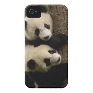 Giant panda babies (Ailuropoda melanoleuca) 2 iPhone 4 Cover
