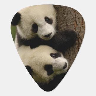 Giant panda babies (Ailuropoda melanoleuca) 2 Guitar Pick