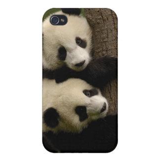 Giant panda babies (Ailuropoda melanoleuca) 2 iPhone 4/4S Cover