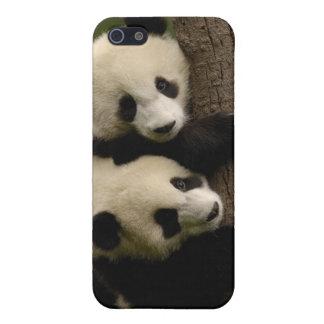 Giant panda babies (Ailuropoda melanoleuca) 2 Case For iPhone 5/5S