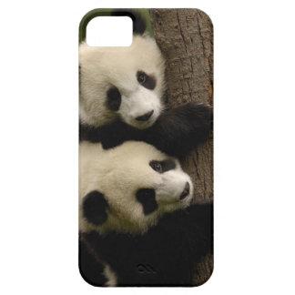 Giant panda babies (Ailuropoda melanoleuca) 2 iPhone SE/5/5s Case
