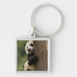 Giant panda babies Ailuropoda melanoleuca) 2 Silver-Colored Square Keychain