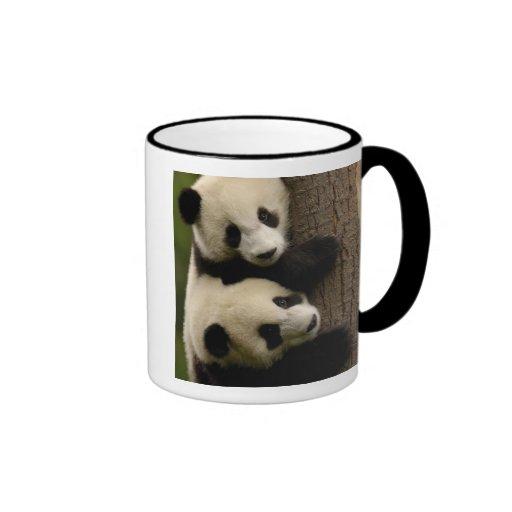 Giant panda babies (Ailuropoda melanoleuca) 2 Coffee Mug