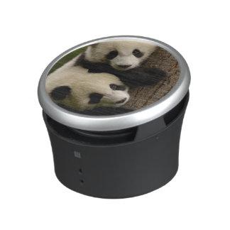 Giant panda babies (Ailuropoda melanoleuca) 2 Speaker