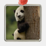 Giant panda babies Ailuropoda melanoleuca) 2 Ornament