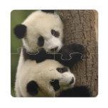 Giant panda babies (Ailuropoda melanoleuca) 2 Puzzle Coaster