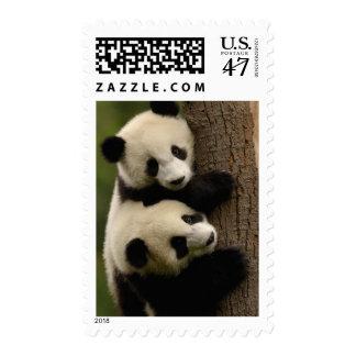 Giant panda babies (Ailuropoda melanoleuca) 2 Postage