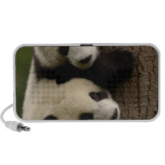 Giant panda babies (Ailuropoda melanoleuca) 2 Mp3 Speaker