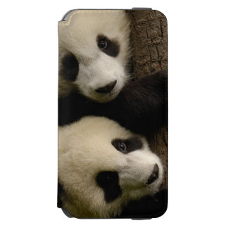 Giant panda babies (Ailuropoda melanoleuca) 2 Incipio Watson™ iPhone 6 Wallet Case