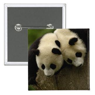 Giant panda babies (Ailuropoda melanoleuca) 3 Buttons